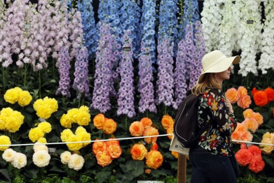 A visitor passes blooms on the Blackmore and Langdon Ltd exhibit at the RHS Chelsea Flower show in London Monday May 22, 2017..RHS / Luke MacGregor