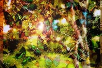 butterflyspiderjam
