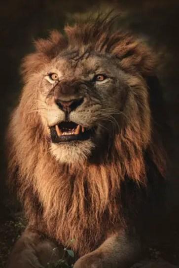 africa-safari-african-2