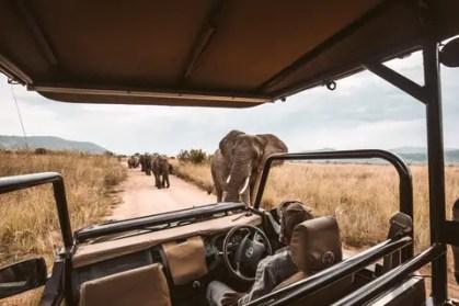 africa-safari-african-9