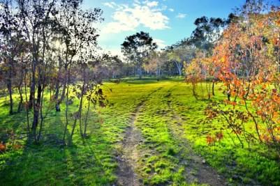 mulligans landscape