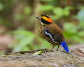 bird-2784003