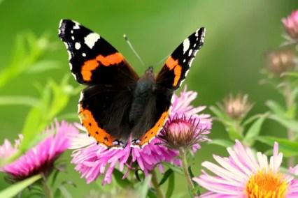 butterfly-123837