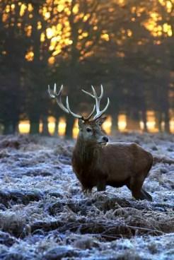deer-3034728_1920