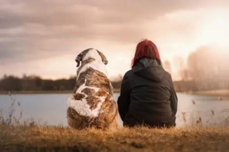 dog-pet-rescue-6