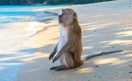 monkey-3251530