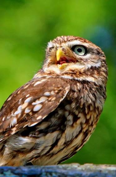 owl-275940