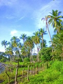 palms-602710