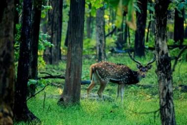 spotted-deer-2368037