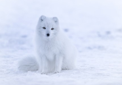 arctic travel activities