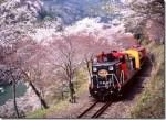 嵐山の桜2015の見どころ!幻想の夜桜電車はぜひ乗りたい!