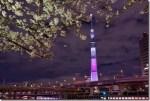 隅田川の桜2016!墨堤さくらまつりや雑貨屋めぐりが楽しい!