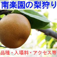 南楽園の梨狩りを紹介するイメージ画像