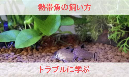 熱帯魚の飼い方をトラブルに学ぶ画像
