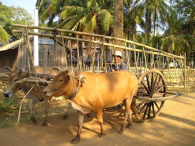 カンボジアの仕事