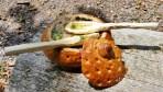 04.06.2016 - gefülltes Suppenbrot mit den eigenen Holzlöffeln