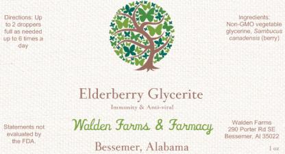 Elderberry Glycerite