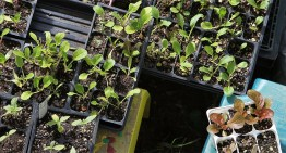 When To Start Planting Your Garden