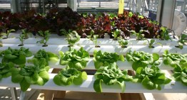 A Hydroponic Solution…
