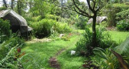 5 Steps To Becoming a Permaculture Designer For Fun And Profit. Don't Skip The Last Step!