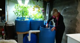 DIY Aquaponics: When You Add These Two Things Together Something Magical Happens