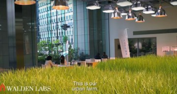 More Than Work: Tokyo Office Grows Own Food in Colossal Vertical Farm
