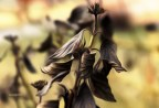 kwiatek2
