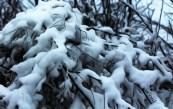 winterfairytale
