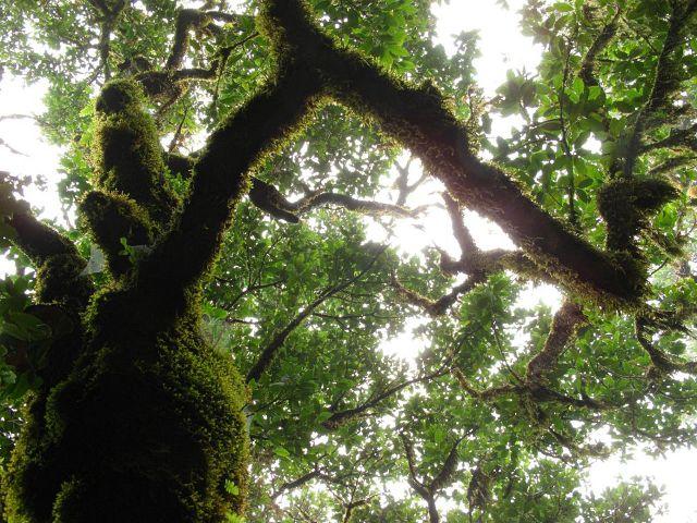Feenwald auf Madeira | Waldspaziergang.org