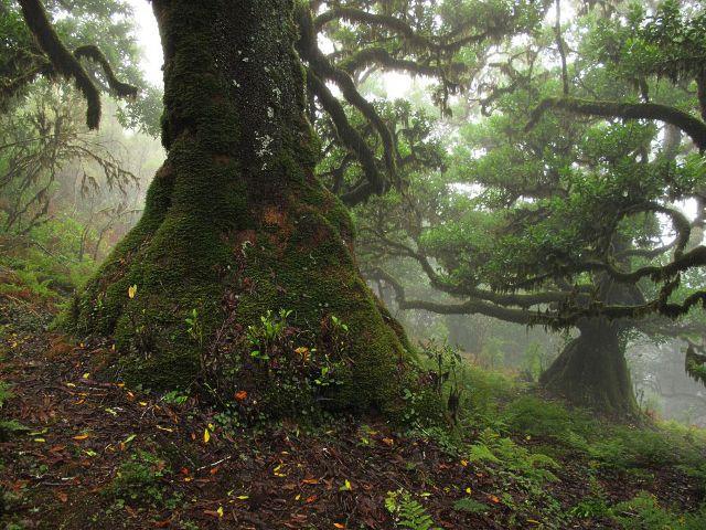 Feenwald Madeira | Waldspaziergang.org