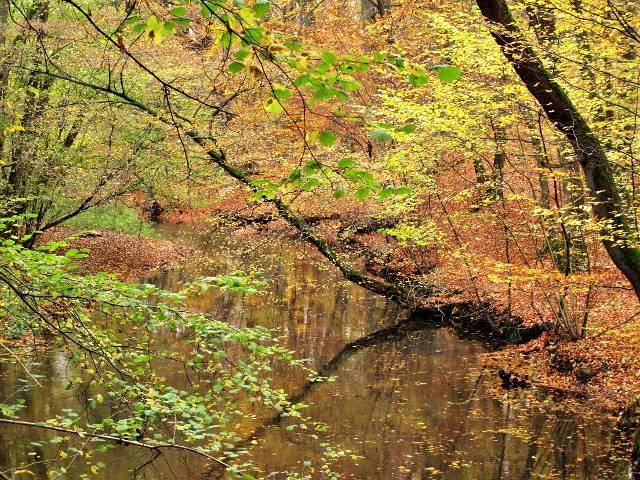 Sachsenwald im Herbst | Waldspaziergang.org