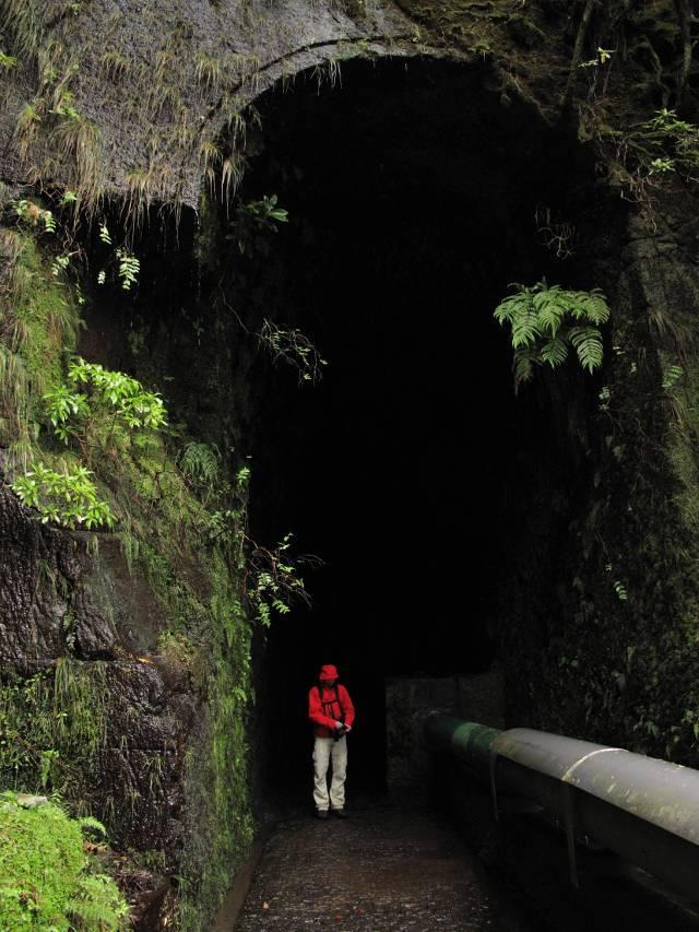 Reitertunnel Madeira   waldspaziergang.org