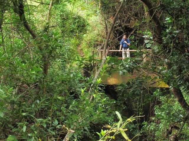 Brücke über Ribeira Funda   Waldspaziergang.org