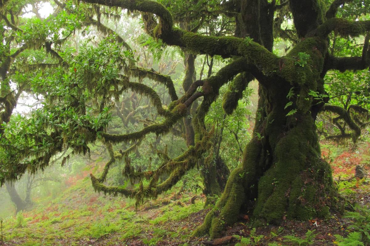 Mystisches Grün: Der Feenwald auf Madeira