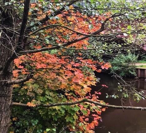 Naturhandwerk und Naturverbindung im Herbst.