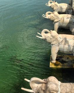 udaipur-elephants