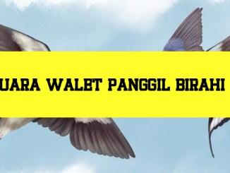 download suara panggil walet birahi