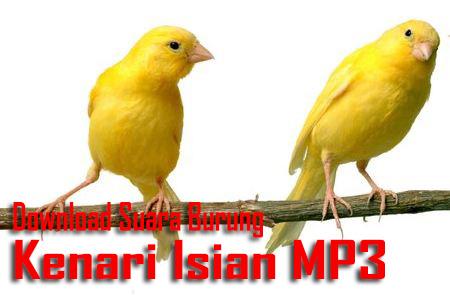download suara burung kenari isian