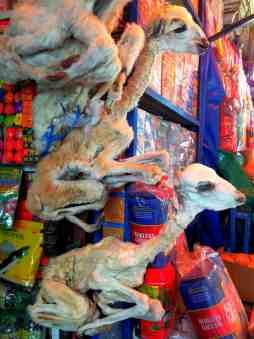 dried llama