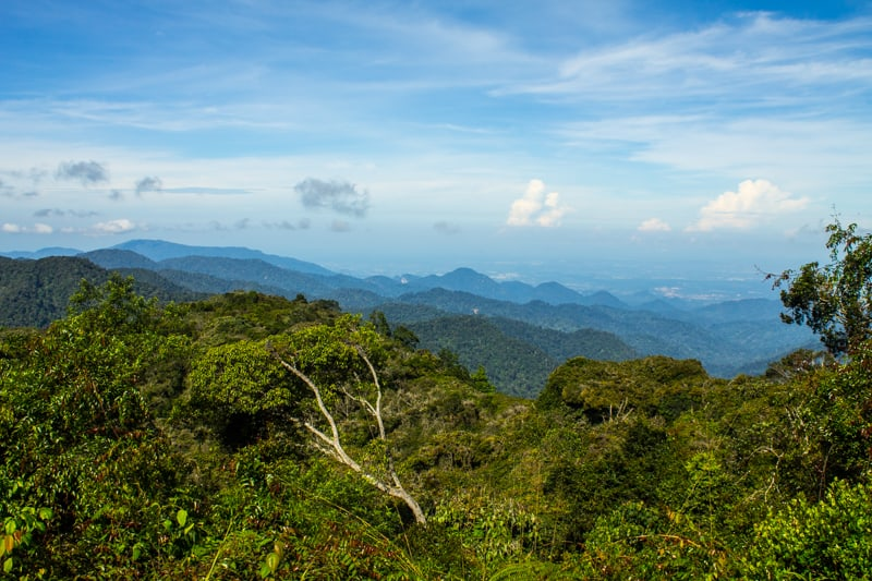 Hiking in the cameron highlands in malaysia