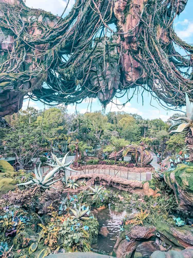 Outside the flights of passage pandora queue