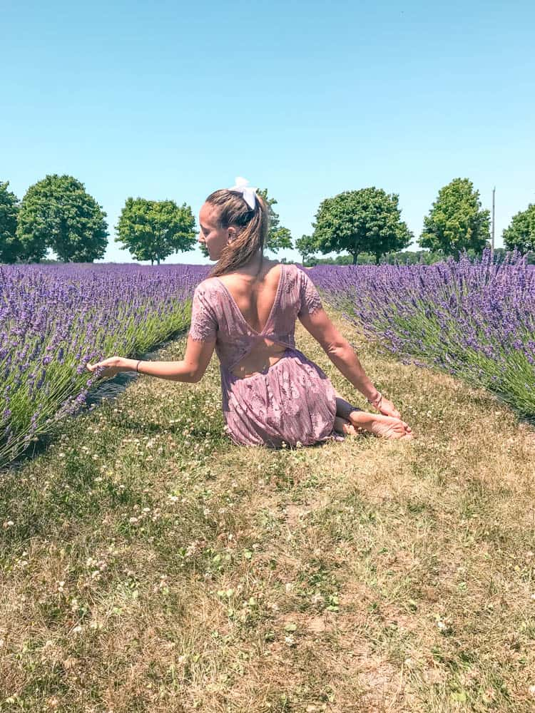 hanging around in lavender fields near toronto for instagram pictures