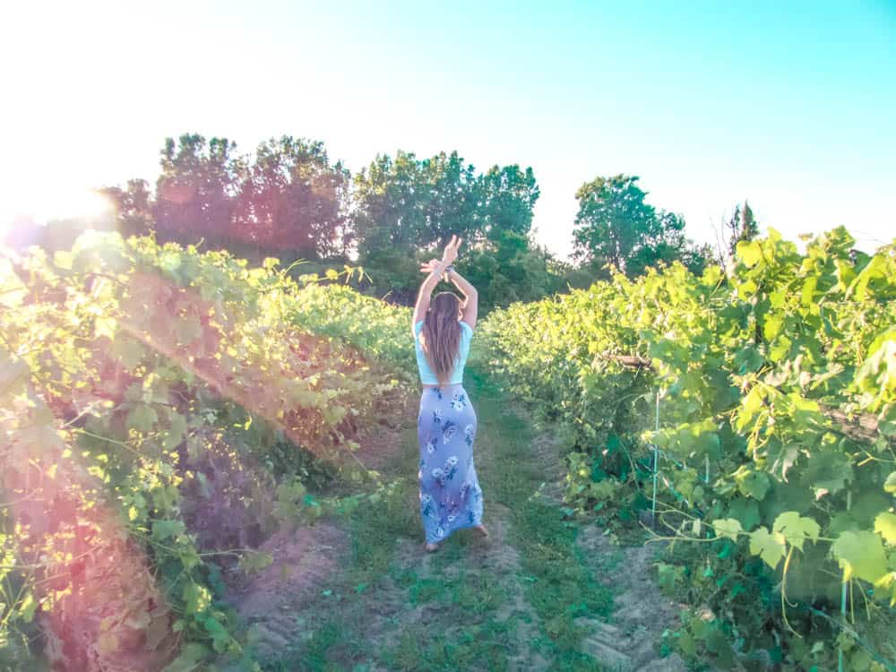 dancing through the vineyard at burning kiln winery in norfolk county