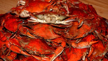 Crab is one of the 13 must eat foods in Cambodia