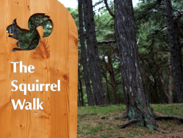 Red Squirrels walk Formby.