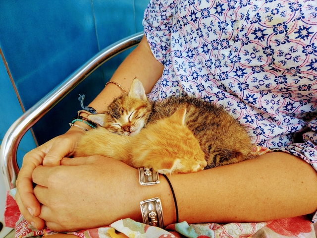Saving Kittens Whilst Travelling In Spain: Tiggers Story