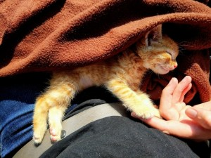 Rescuing kitten saving cats in Spain travels L.E.O.N