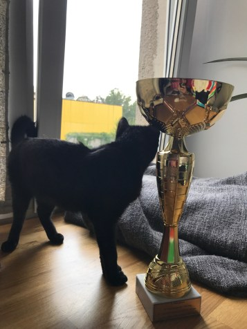 Karma loves the trophy, maybe I should give it to her.