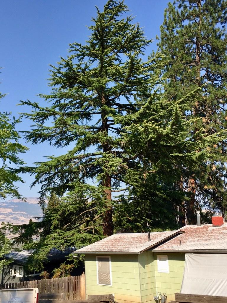 Ashland, walk, tree