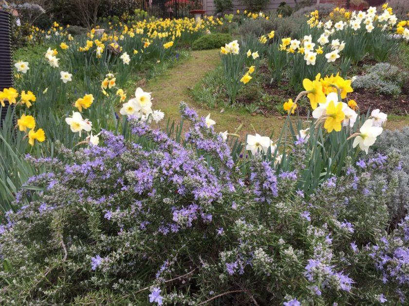 Ashland, flowers